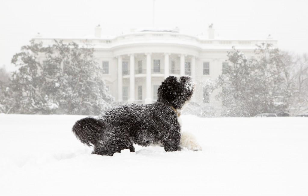 dog-742007_1920