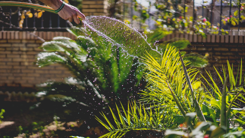 Photo by Irene Dávila via Unsplash